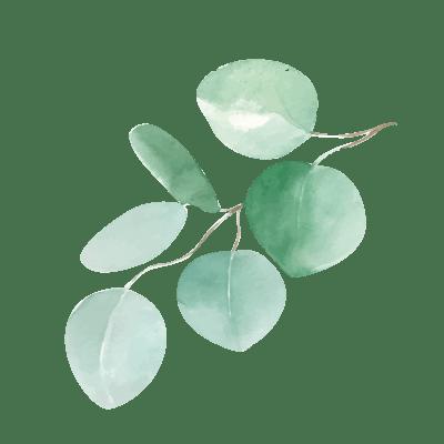 eucalyptus-2