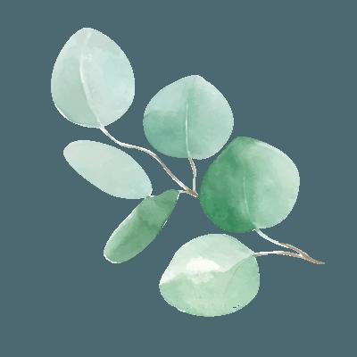 eucalyptus-3