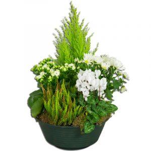 Recueil-coupe de plantes deuil  50 Plantes