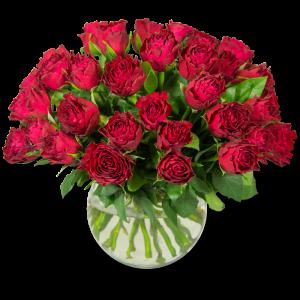 Rouge Baiser  40 Roses Par Occasion > Fleurs Saint Valentin