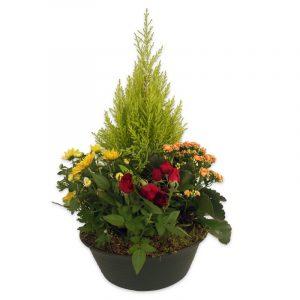 Souvenir - coupe de plantes deuil  50 Plantes