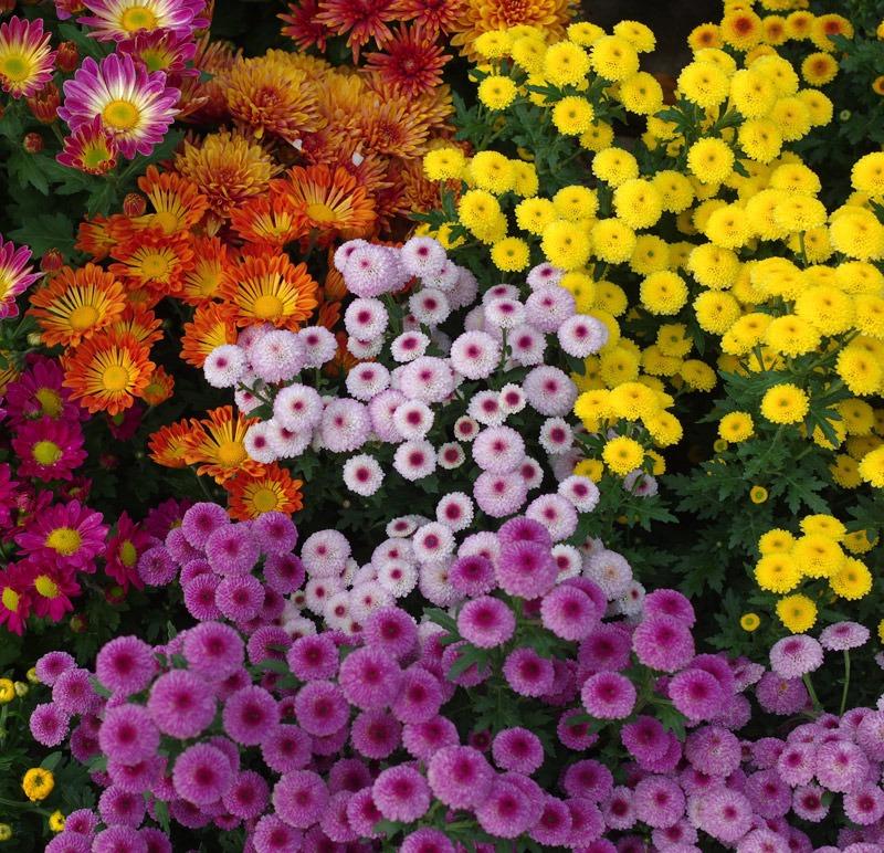 toussaint-fleurs-boutique-en-ligne