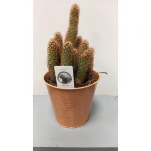 cactus-cierge-avec-cache-pot (1)